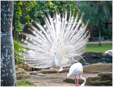 парк птиц калужская область фото